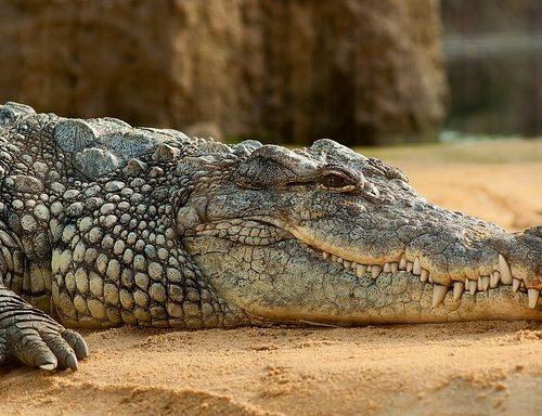 Ma il coccodrillo come fa? il caso Isbn e la crisi dell'editoria
